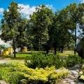 Park im. Jana Pawła II drzewa krzewy