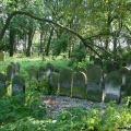 cmentarz żydowski drzewa i tablice