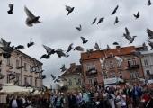 gołębie (4)